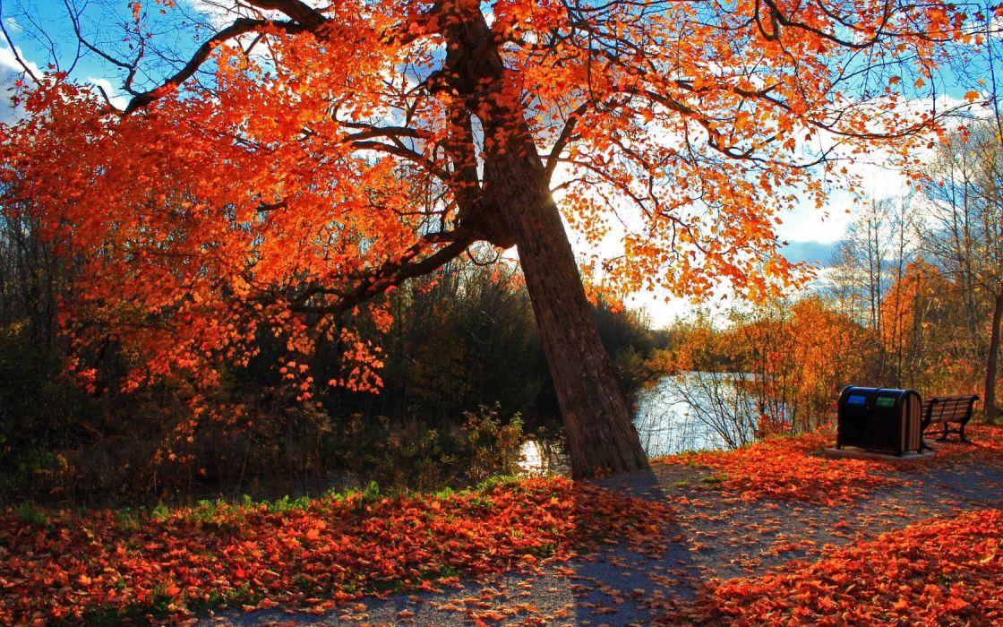 autumn park river shop landscape wallpaper