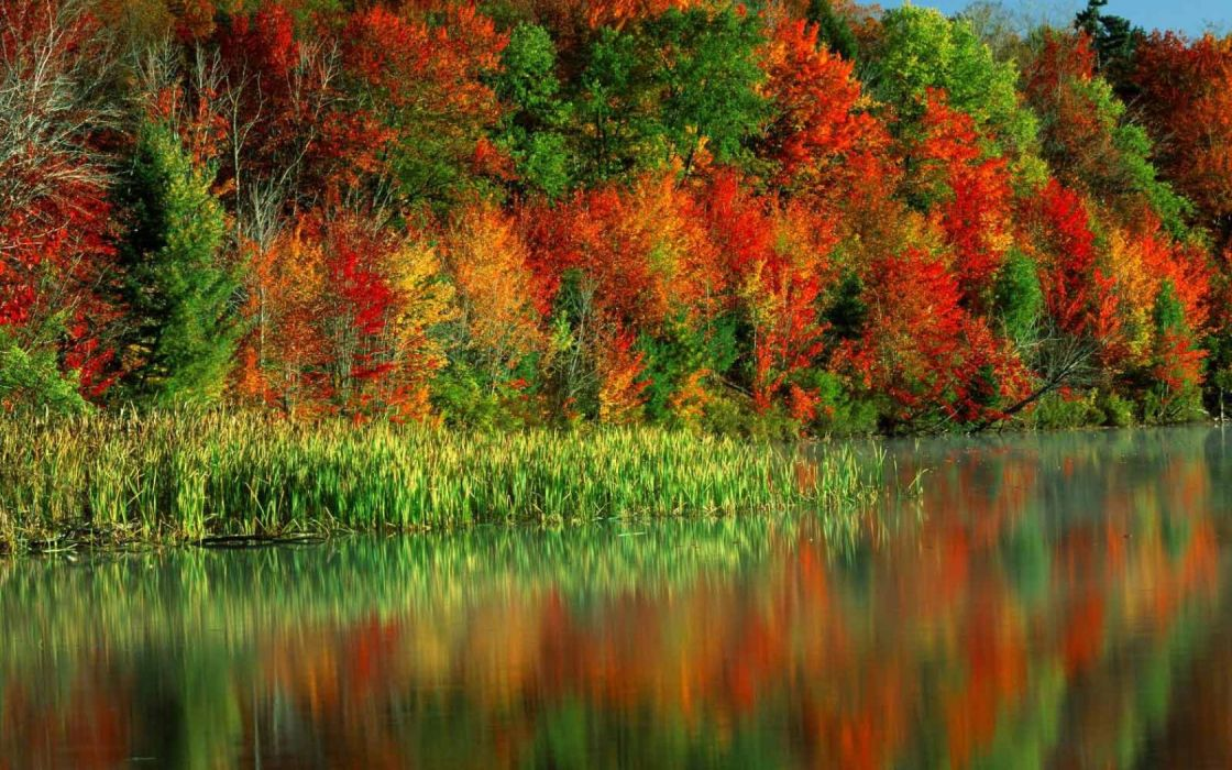 trees autumn colors water canes wallpaper