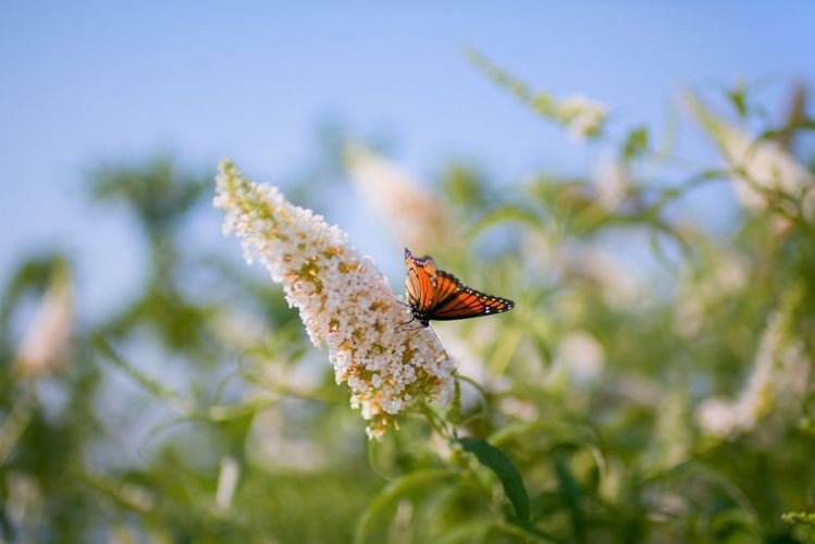 butterfly leaves grass patterns insect wallpaper