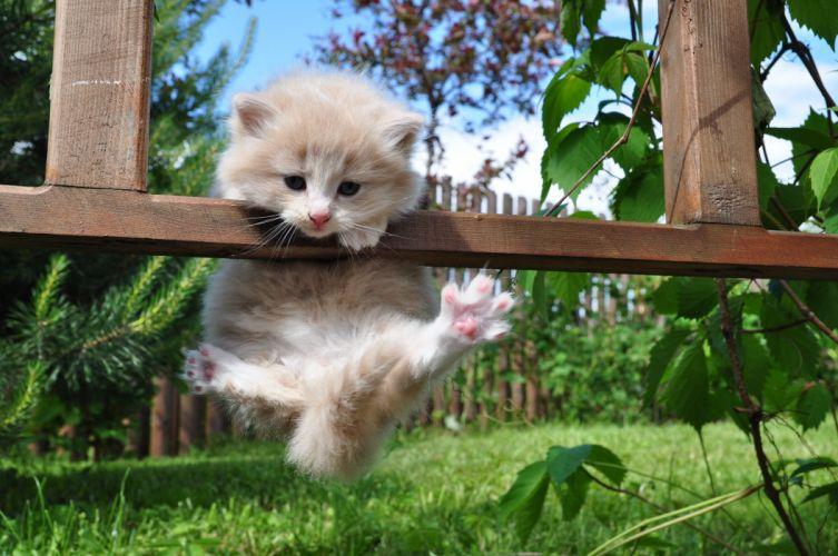 kitty furry hung grass resting cute wallpaper
