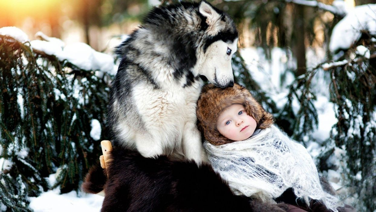 dog husky baby care forest snow winter wallpaper