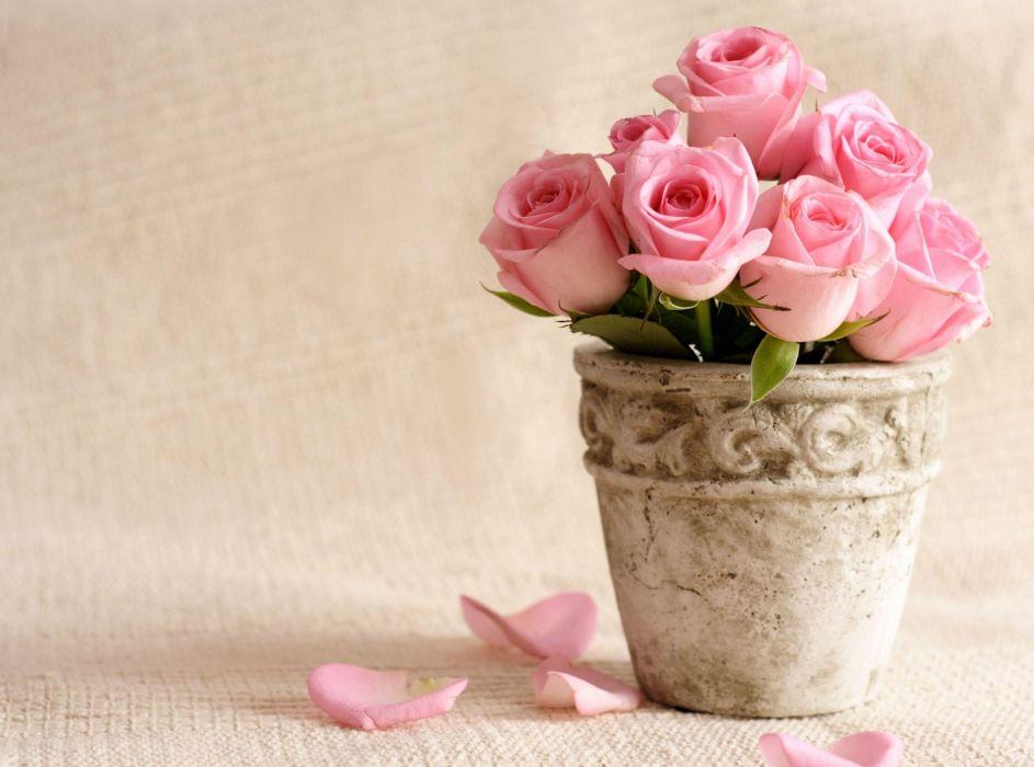 roses flowers pot petals wallpaper