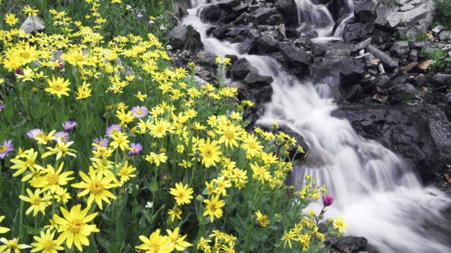 flowers mountain river stones wallpaper