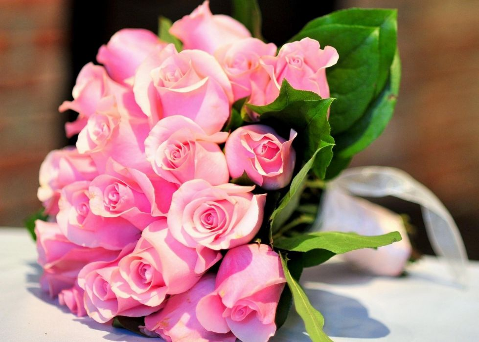 roses flowers pink flower decoration beautiful wallpaper