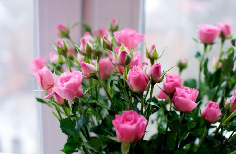 roses flowers small bouquet wallpaper