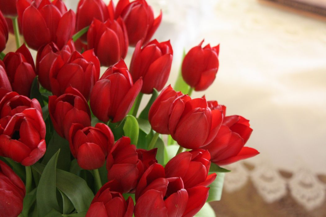 tulips flowers bouquet red beautifully wallpaper