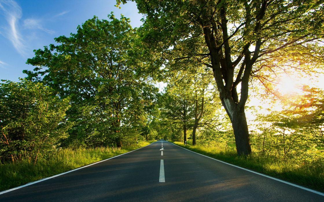 carretera arboles sol wallpaper