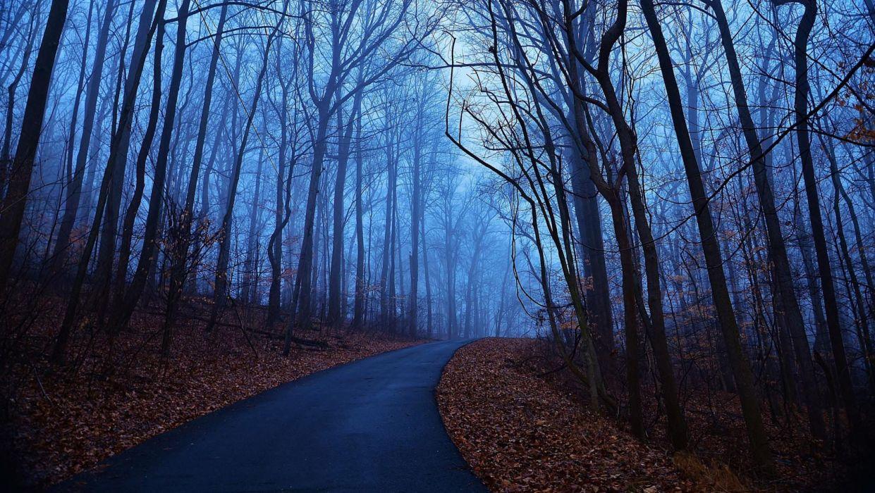 carretera bosque arboles hojas wallpaper