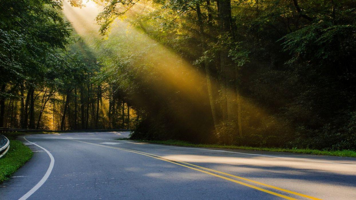 curva carretera arboles luz sol wallpaper