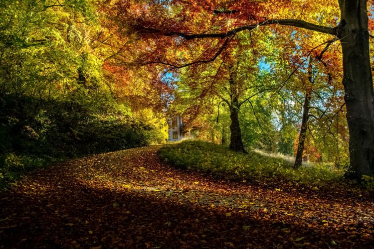 Autumn Trees Branches Foliage Nature wallpaper