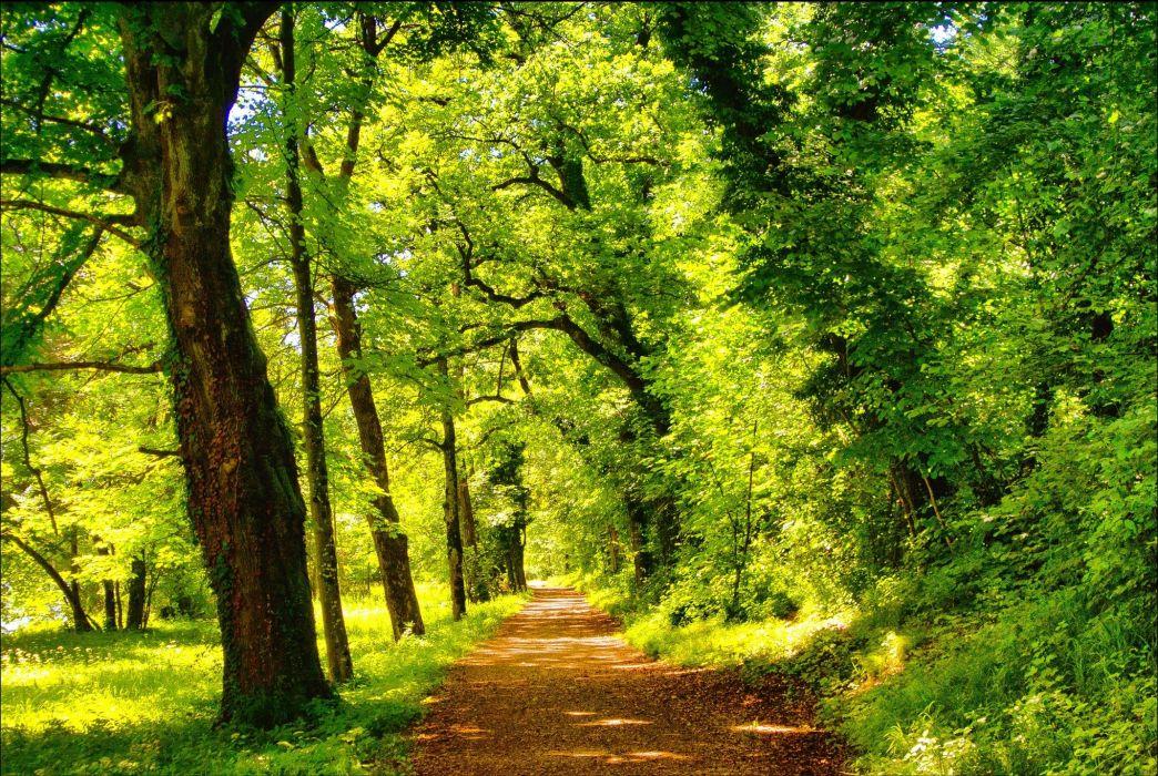Roads Parks Trees Nature wallpaper