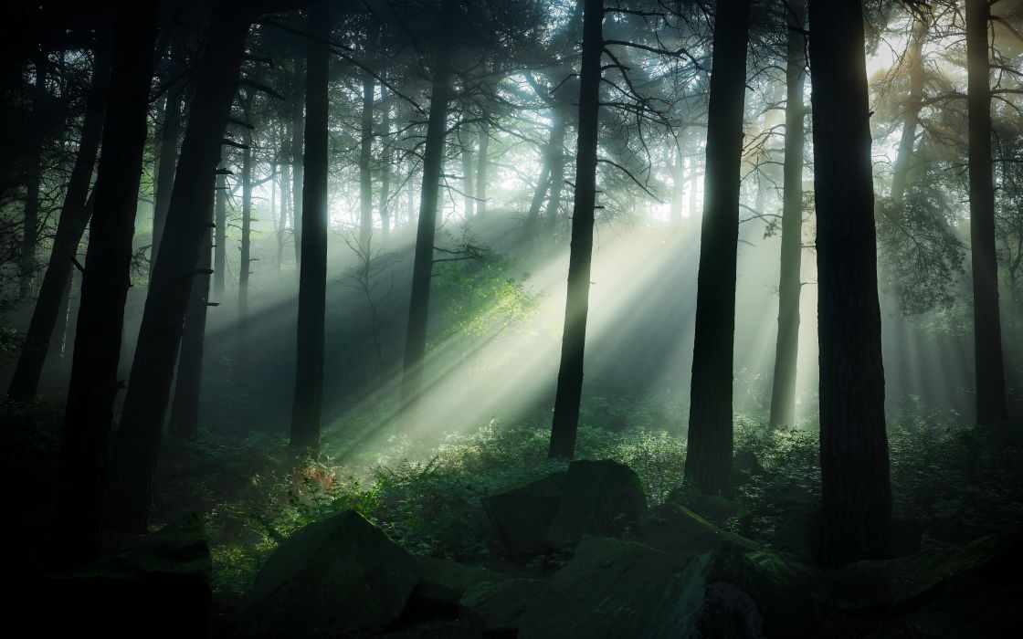 Forests United Kingdom Trunk tree Rays of light Trees Pinewoods Matlock Nature wallpaper