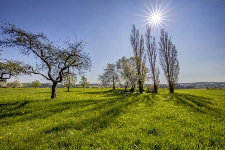 Germany Grasslands Sky Grass Trees Sun Beltheim Nature wallpaper