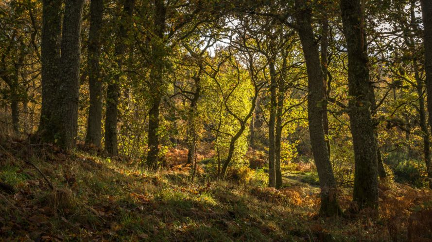 Scotland Forests Trees Trunk tree Pitlochry Nature wallpaper