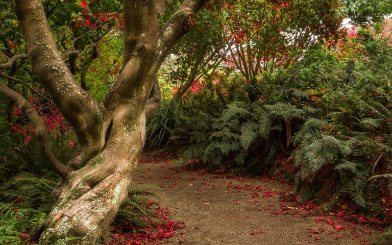 New Zealand Shrubs Trunk tree Trail Dunedin Botanic Gardens Otago wallpaper
