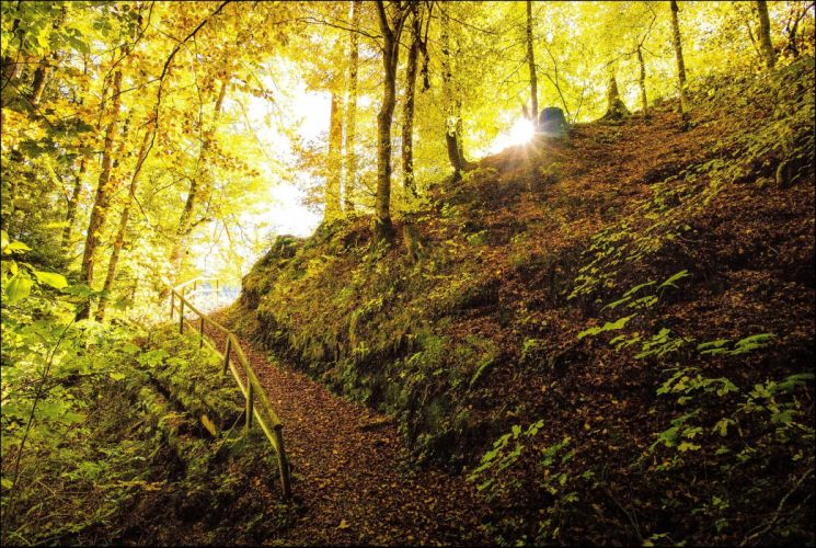 Forests Autumn Trail Nature wallpaper