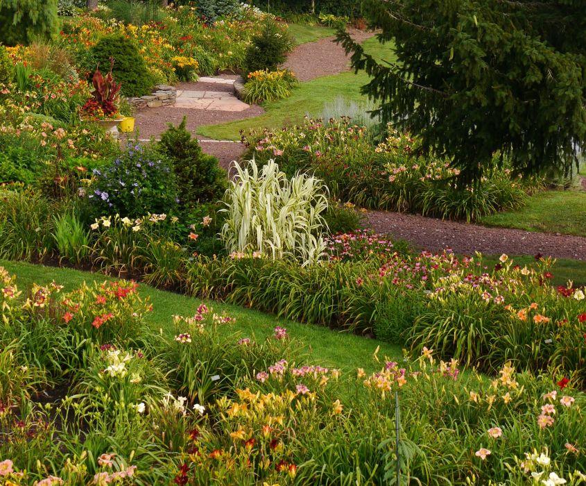 Gardens Lilies Shrubs Nature wallpaper