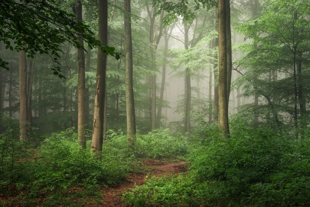 Forests Germany Trunk tree Fog Trees Hilberath Nature wallpaper
