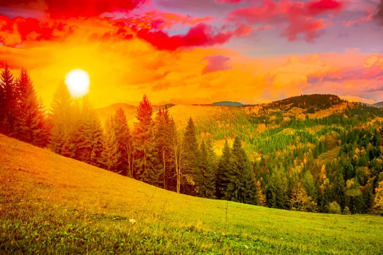 Ukraine Scenery Sunrises and sunsets Mountains Carpathians Fir Sun Grass Nature wallpaper