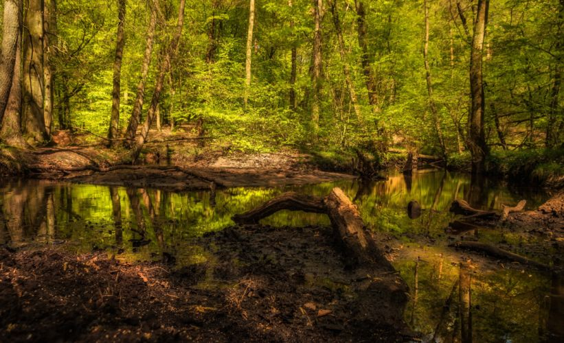Forests Trunk tree Swamp Nature wallpaper