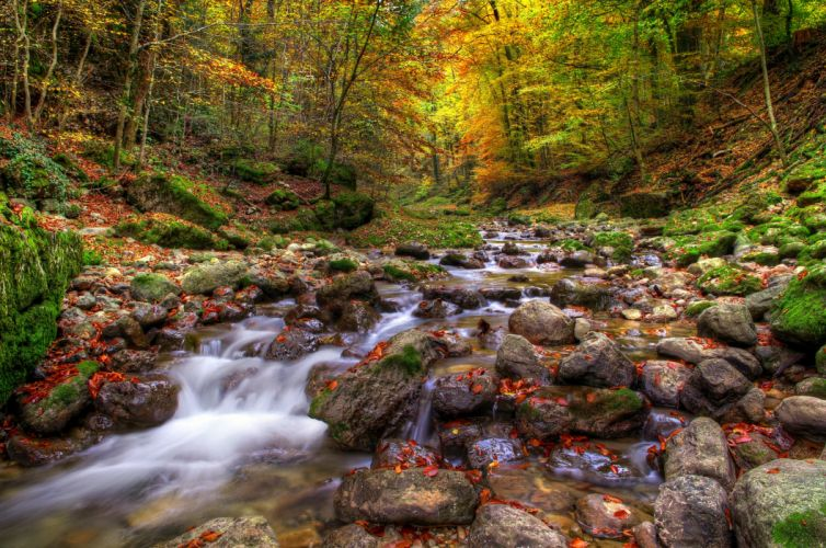 Forests Stones Autumn Stream Nature wallpaper