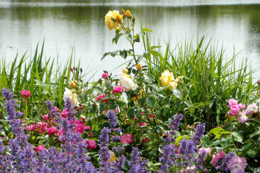 Germany Parks Roses Digitalis Grugapark Essen Nature wallpaper