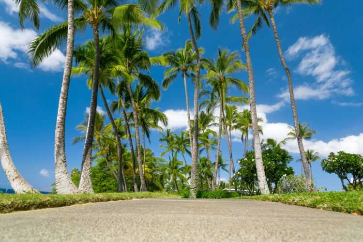 Parks Tropics Sky Hawaii Palma Nature wallpaper