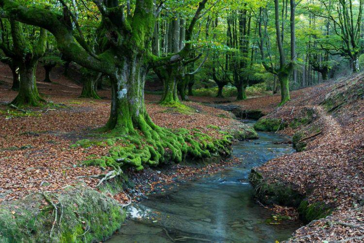 Spain Forests Trees Stream Hayedo de Otzarreta Basque Country Nature wallpaper