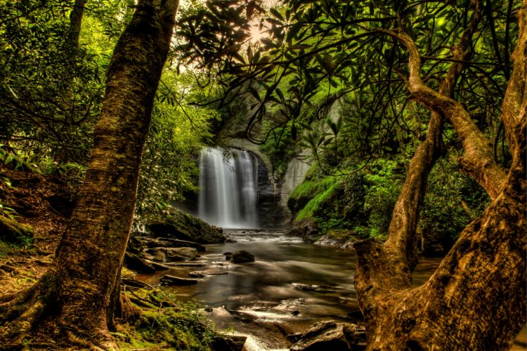 USA Forests Waterfalls Trunk tree Trees Pisgah National Forest Nature wallpaper