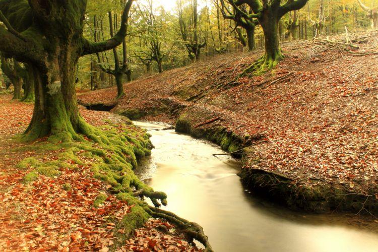 Spain Forests Trees Moss Stream Hayedo de Otzarreta Basque Nature wallpaper