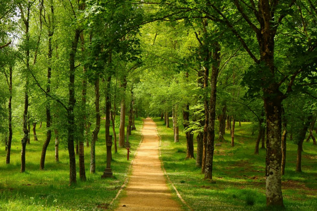 Spain Parks Trees Trail Urkiola Basque Country Nature wallpaper