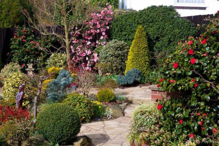England Gardens Roses Shrubs Walsall Garden Nature wallpaper