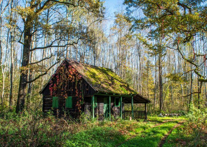 Croatia Parks Houses Trees Moss Grass Crna Mlaka Zagreb Nature wallpaper