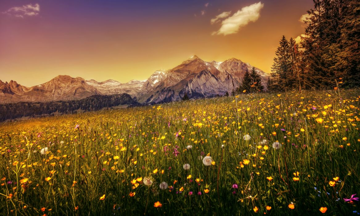 Switzerland Mountains Dandelions Scenery Grasslands HDR Alps Nature wallpaper