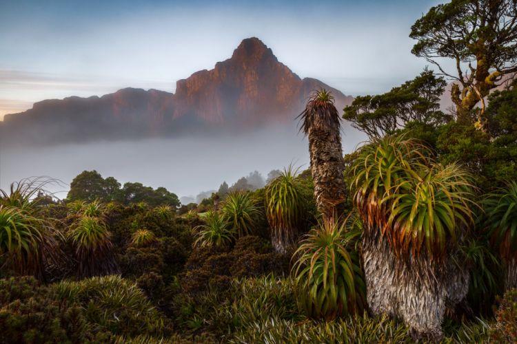 Australia Mountains Cactuses Fog Nature wallpaper