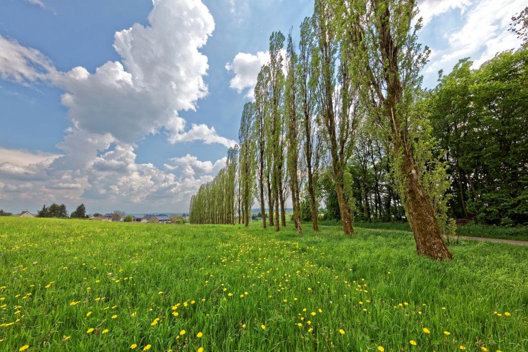 Germany Dandelions Grasslands Sky Trees Grass Clouds Hontheim Nature wallpaper