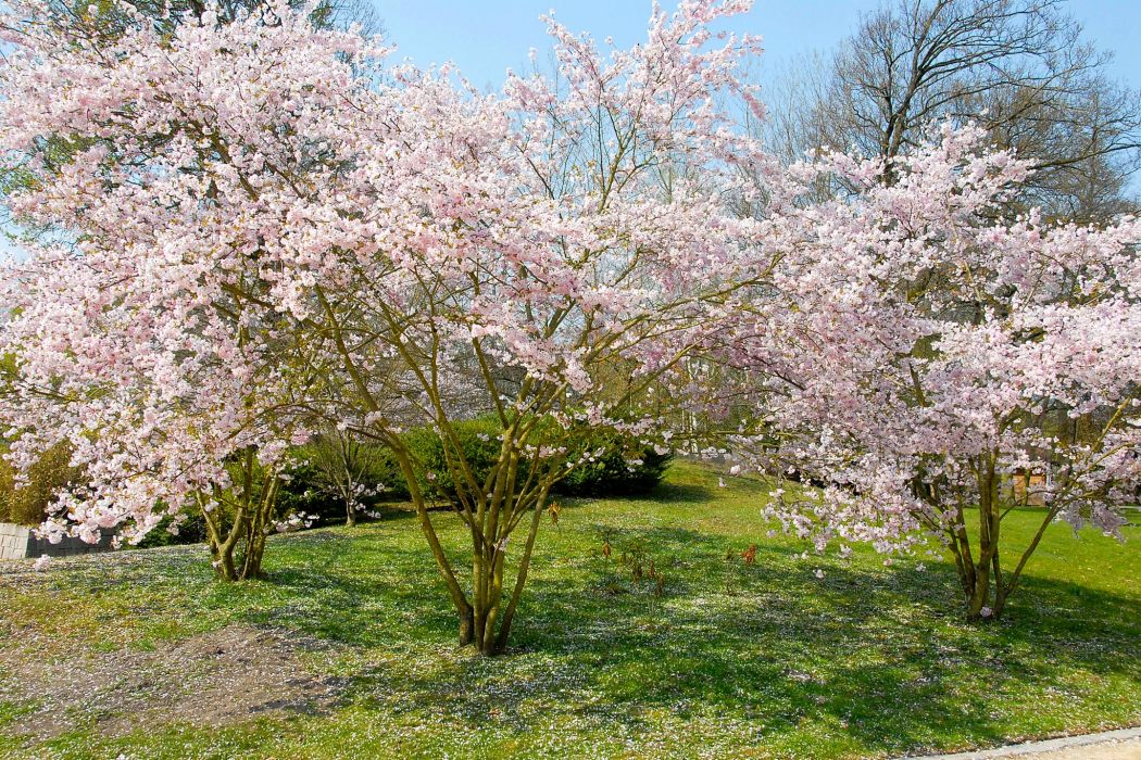 Spring Flowering trees Nature wallpaper