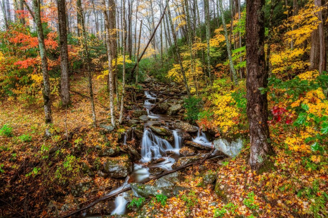 Parks USA Autumn Forests Stream Trees Great Smoky Mountains Nature wallpaper