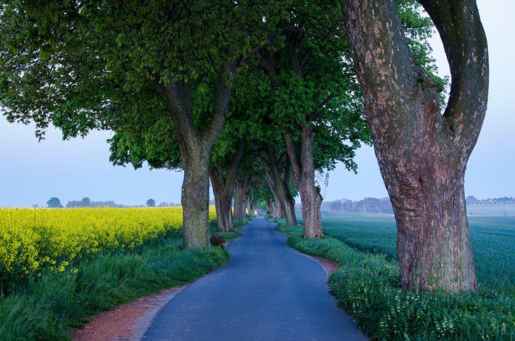 Roads Fields Trees Trunk tree Nature wallpaper