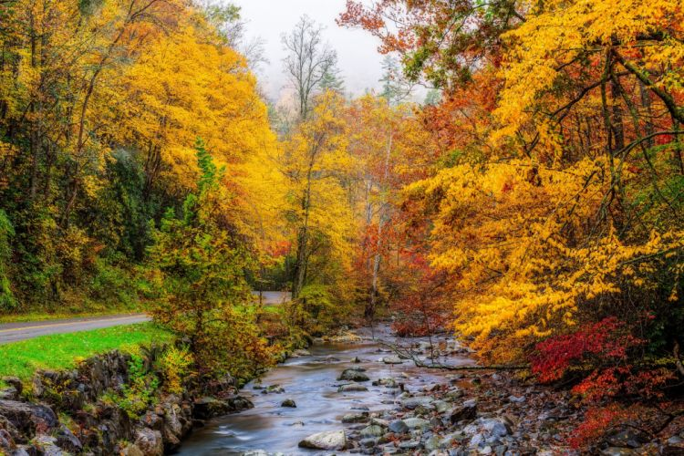 USA Autumn Parks Forests Stream Great Smoky Mountains Nature wallpaper