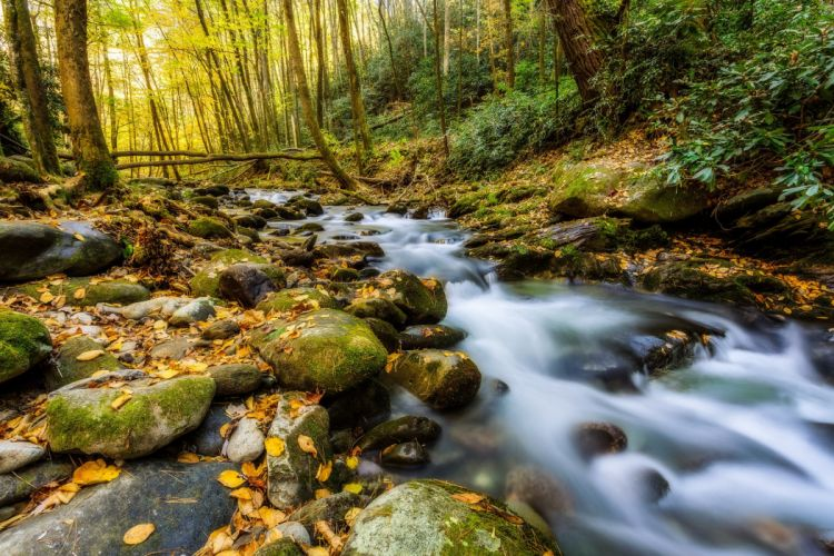 USA Parks Stones Forests Autumn Stream Moss Great Smoky Mountains Nature wallpaper