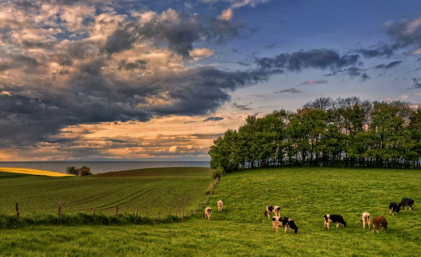 Germany Scenery Fields Grasslands Cow Sky Clouds Trees Hohenhain Nature wallpaper