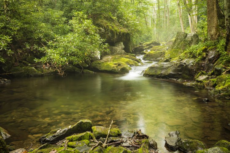 USA Parks Forests Stones Moss Stream Great Smoky Mountains National Park Nature wallpaper
