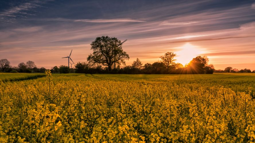 Fields Sunrises and sunsets Rapeseed Nature wallpaper