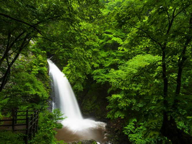 Forests Waterfalls Nature wallpaper