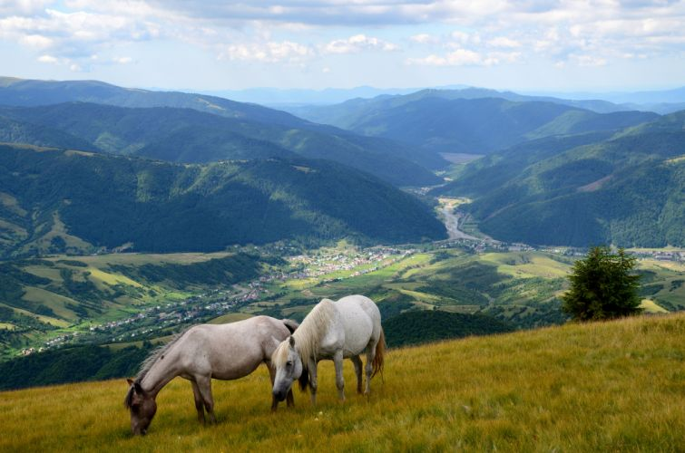 Scenery Mountains Grasslands Horses Two Animals Nature wallpaper