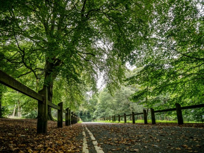 Roads Autumn Fence Trees Nature wallpaper