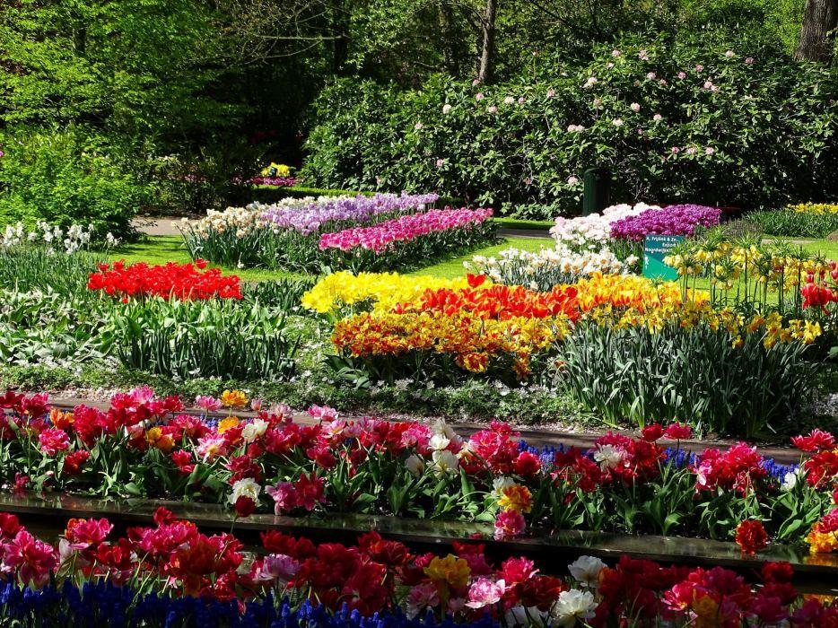 Netherlands Parks Tulips Daffodils Keukenhof Nature wallpaper