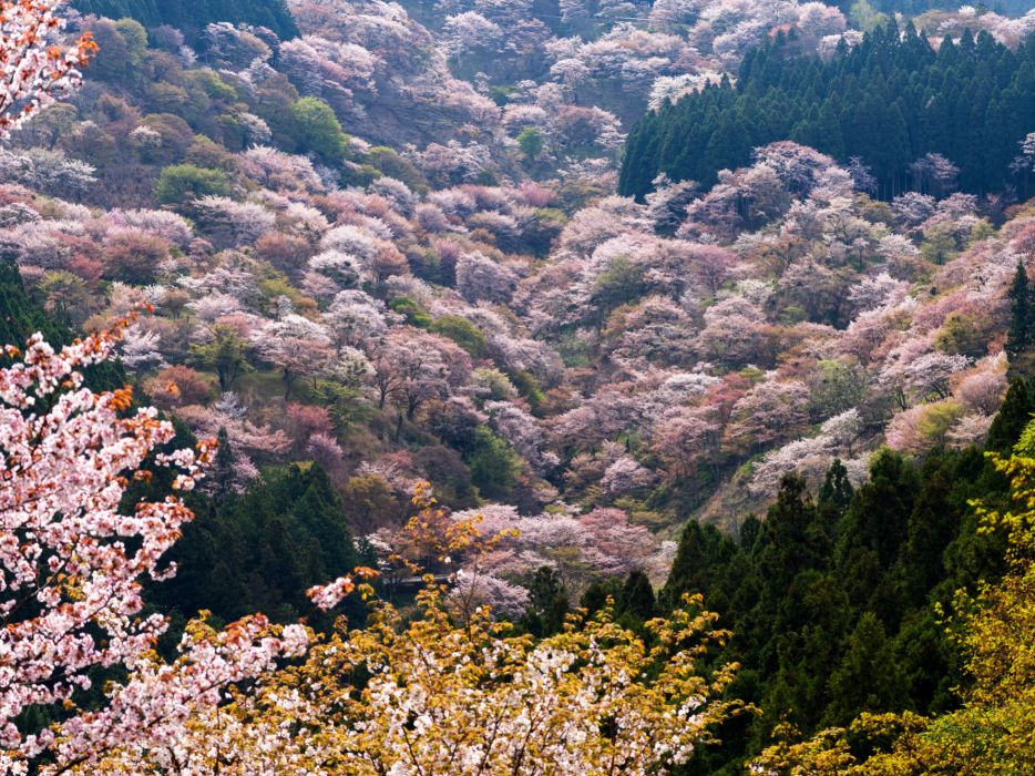 Scenery Spring Flowering trees Nature wallpaper