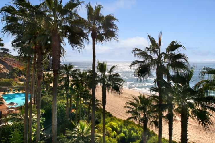 USA Coast Palma Trees Laguna Beach Nature wallpaper